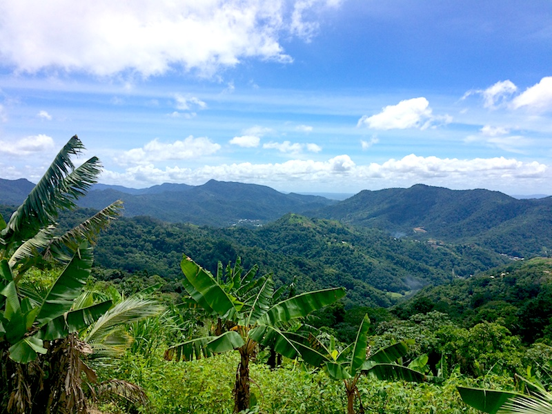 Views of rolling hills and dense jungle across Paramin hills in Trinidad.