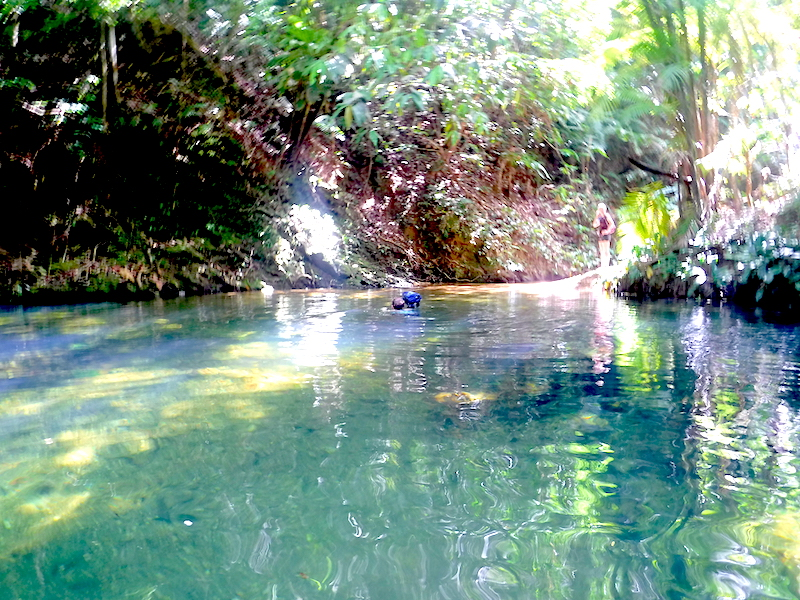 A lady swimming across a river holding her bag above the water in the Trinidad jungle.
