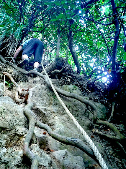 Man climbing down cliff covered in roots using a rope.