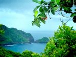 View of bay surrounded by green rugged hills through lush green jungle in Dominica.