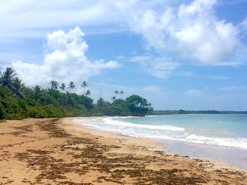 Deserted beach with golden sand and seaweed in Tobago.