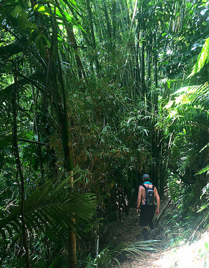 Terry hiking deep in the Main Ridge Forest Reserve, Tobago.