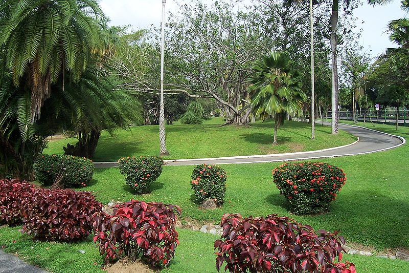 Colourful shrubs and path in Port of Spain Botanical Gardens