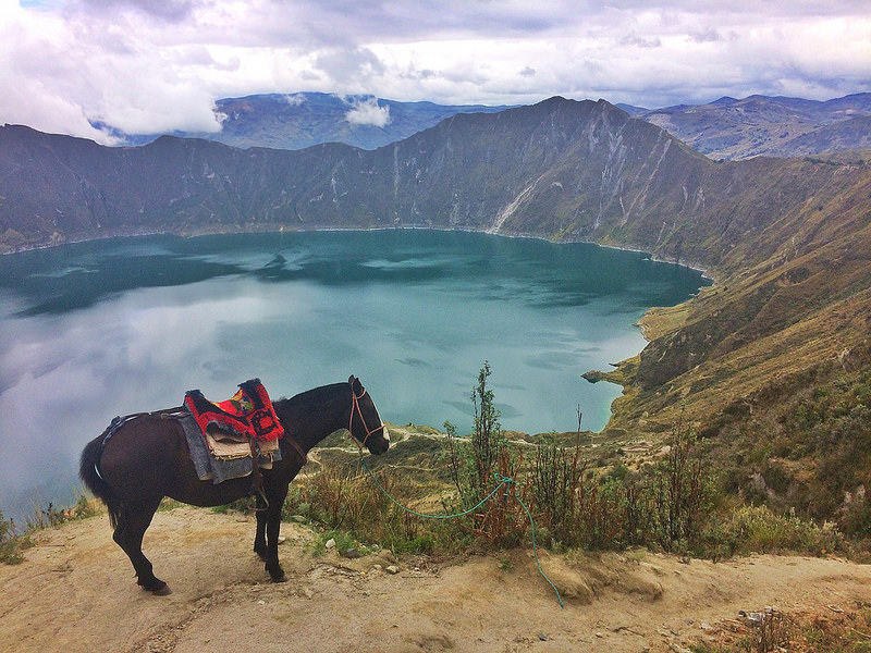 Mule with saddle standing alone on the edge of a path down to the emerald coloured Laguna Quilotoa near Quito, Ecuador.