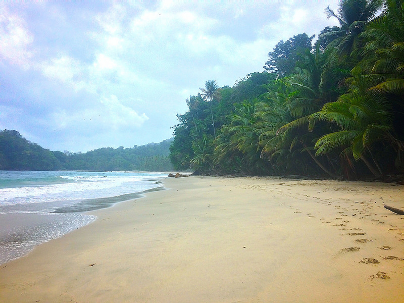 deserted Caribbean beach with golden sand and palm trees in Trinidad.