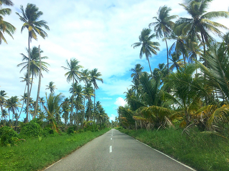 long straight road with coconut palm trees on both sides
