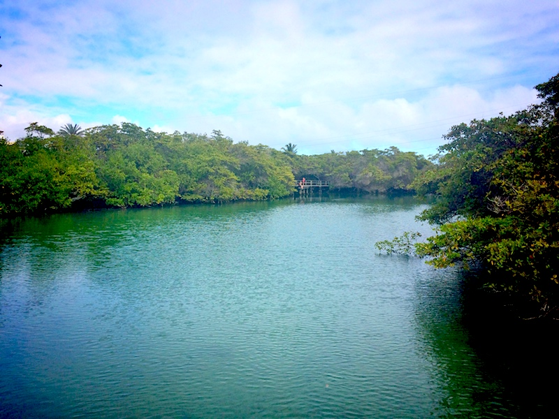 An emerald coloured lagoon surrounded by mangrove trees at Laguna de las Ninfas on Santa Cruz Island, Galapagos, Ecuador.