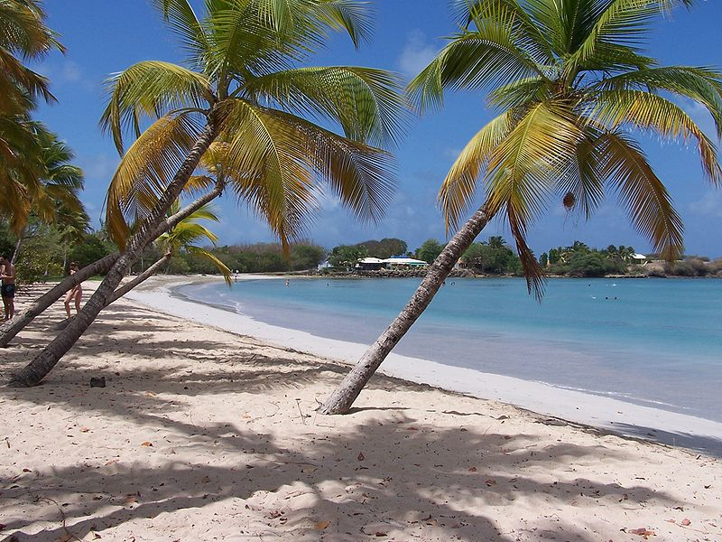 Leaning palm trees on a Caribbean beach in Martinique.