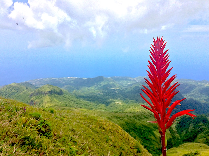 Bright red flower with view from the top of Mont Pelee volcano in background, Martinique.