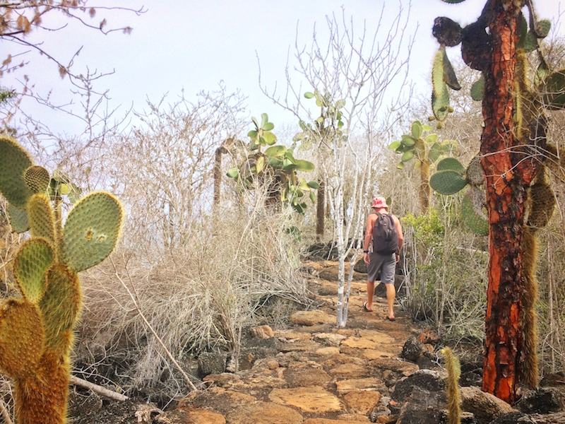 Man walking along a lava rock path surrounded by cactus trees near Las Grietas, Galapagos