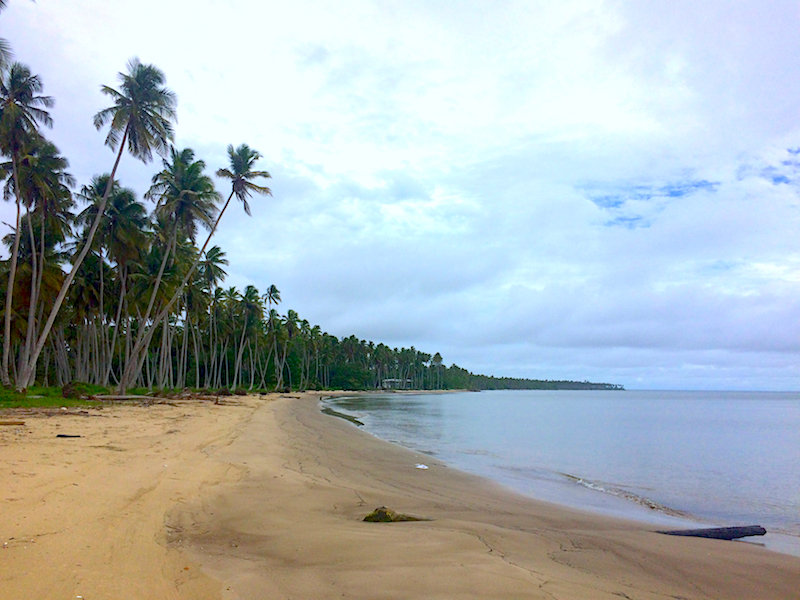 Sweeping golden bay with thousands of coconut palm trees and cloudy sky, Columbus Bay, Trinidad