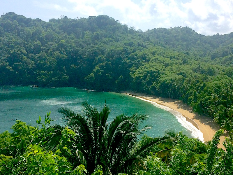 Emerald bay from above, surrounded by dense jungle. Englishman's Bay, Tobago