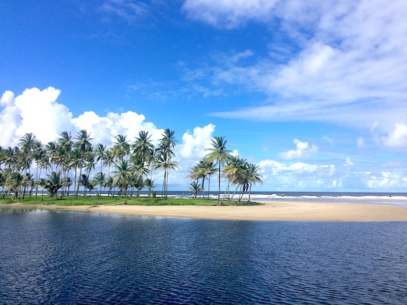 Palm trees on a sand bar separating Mayaro River from Atlantic Ocean in Trinidad