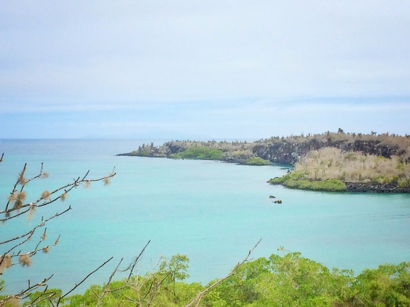 Looking across green plants to turquoise water and a peninsula at Las Grietas, Galapagos.