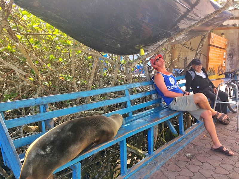 Two men and sea lion waiting on a blue bench in Santa Cruz, Galapagos