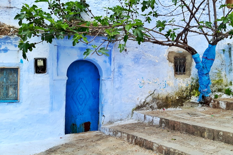 Blue washed wall, deep blue door and green tree in Chefchaouen, Morocco.