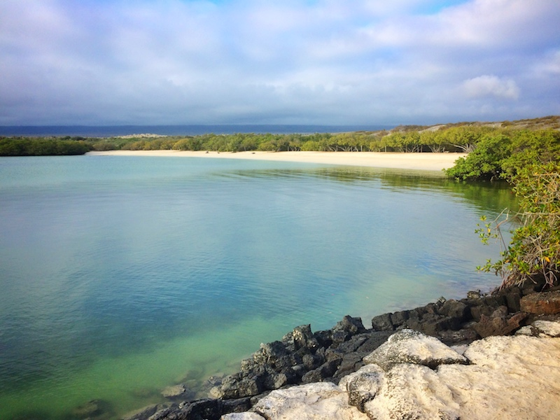 Looking across an emerald water bay to a long white beach backed by forest called Playa Mansa in Galapagos.