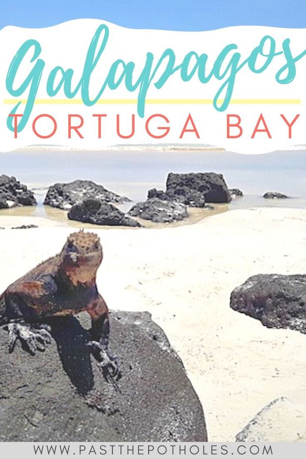 Marine iguana sitting on a lava rock with the white sand beach behind and text: Tortuga Bay, Galapagos.