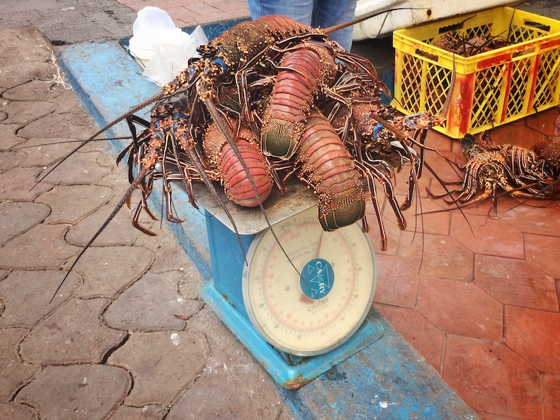 Stack of orange lobsters on top of blue scales at Puerto Ayora Fish Market, Galapagos.