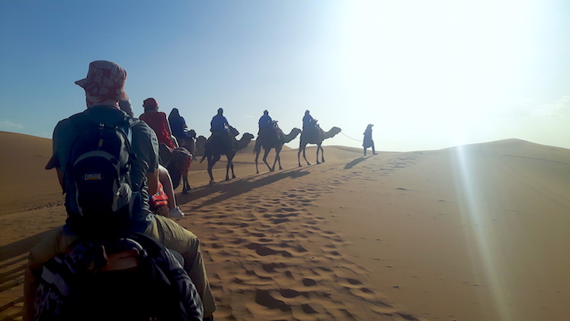 Camel train led by a Berber walking across sand dunes at sunset, Morocco.
