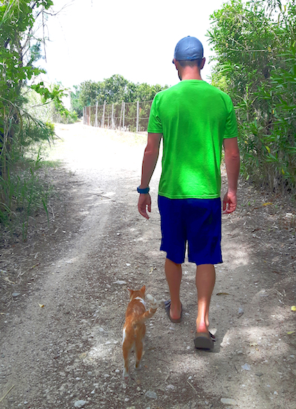 Man walking down a forest track with a ginger cat walking beside him while cat sitting in Spain.