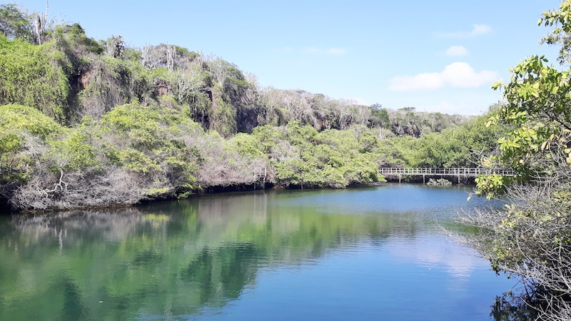 Trees reflecting in the blue water at Laguna de las Ninfas in Puerto Ayora, Santa Cruz, Galapagos Islands.
