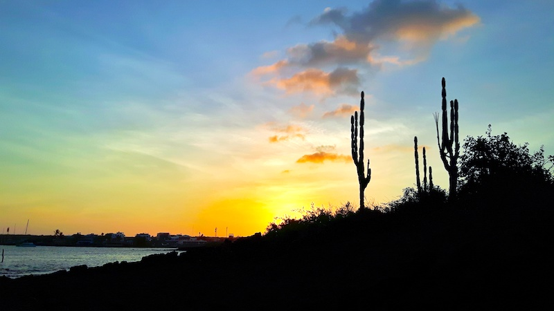Beautiful sunset from Santa Cruz beach with cactus in Puerto Ayora, Galapagos Islands.