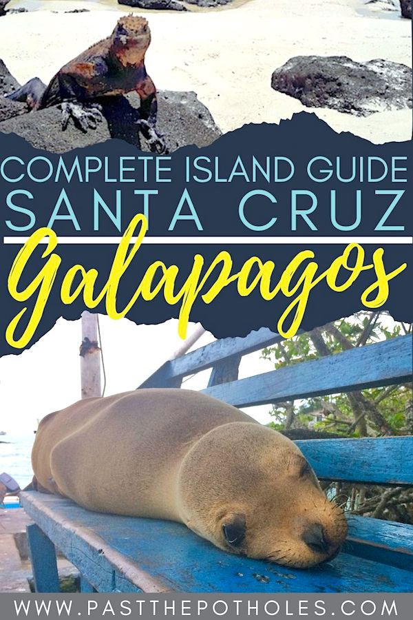 Marine iguana, sea lion and the text: Complete Island Guide, Santa Cruz, Galapagos.