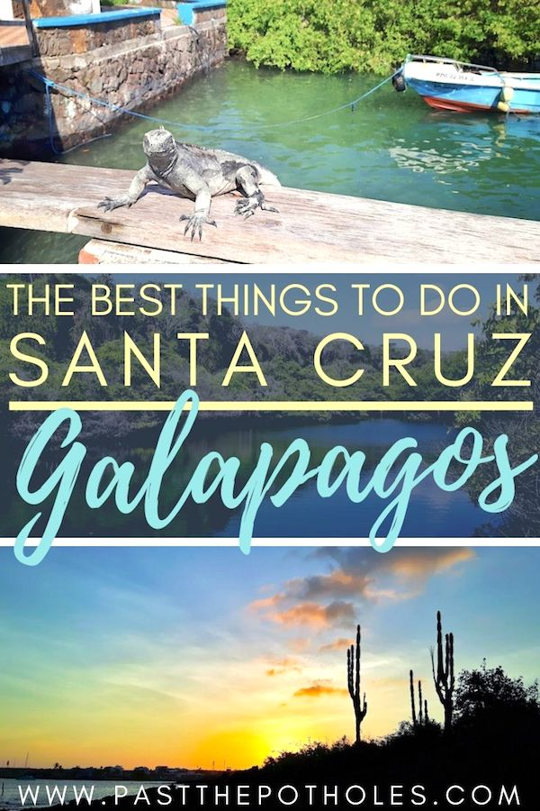 Marine iguana and sunset with text: The best things to do in Santa Cruz, Galapagos.