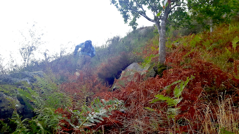 Man climbing through thick underbrush up the side of a mountain in Ullswater, Lake District, UK.