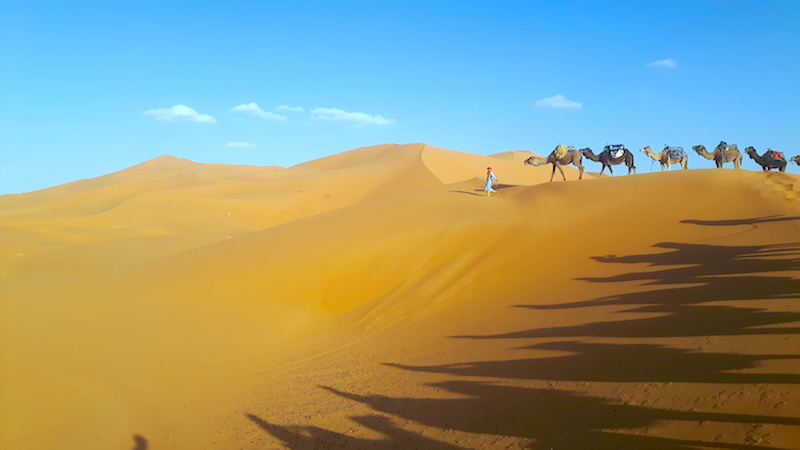 Berber nomad leading a camel train over sand dunes in the Sahara desert, Morocco.