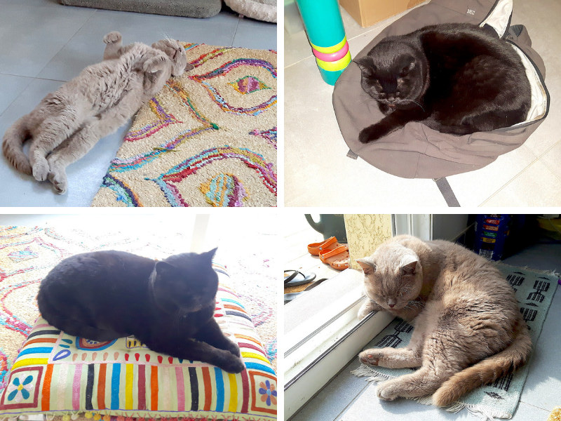 Compilation of cat pictures from housesitting in France.