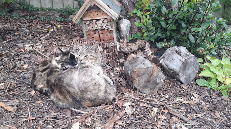 Two cats cuddled together in the garden while housesitting in Devon, England.