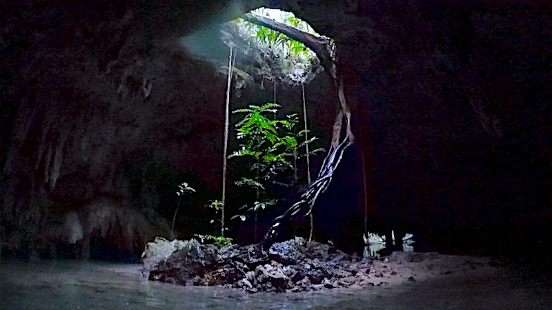 Tree and roots coming through an opening in a cenote roof, Mexico