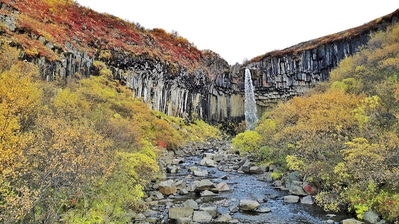 Basalt columns behind Svartifoss waterfall with fall colour foliage all around in Skaftafell National Park, Iceland