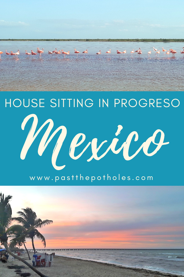 Beach sunset and flamingoes in a lagoon with the text: House sitting in Progreso, Mexico.