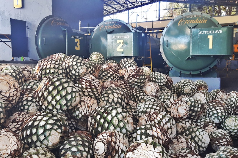 Pile of agave piñas in tequila distillery on a tequila tour, Jalisco Mexico.