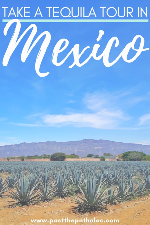 Agave field under blue sky in Jalisco with text: Take a tequila tour in Mexico.