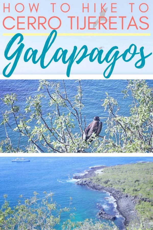 Frigate birds in the trees above a cove with text: How to hike to Cerro Tijeretas, Galapagos