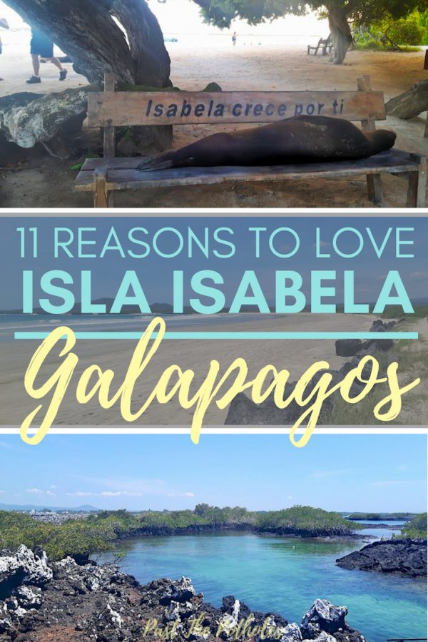 Sea lion on the beach, Las Tintoreras with text: 11 reasons to love Isla Isabela, Galapagos