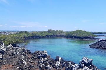 Lava rock formations around a bright blue lagoon at Las Tintoreras, Isabela Galapagos Islands.