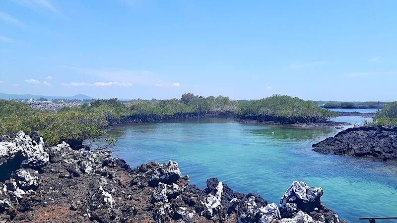 11 Reasons to visit Isla Isabela, Galapagos – independent travel guide