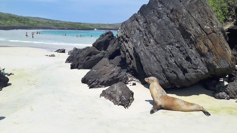Sea lion on a white sand beach with turquoise water at Puerto Chino, Galapagos