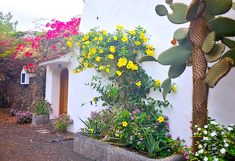 Beautiful flowers outside a white-walled building in Puerto Ayora, Galapagos.