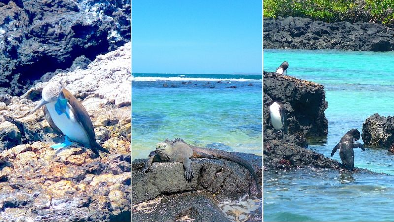 Collage of Galapagos animals.