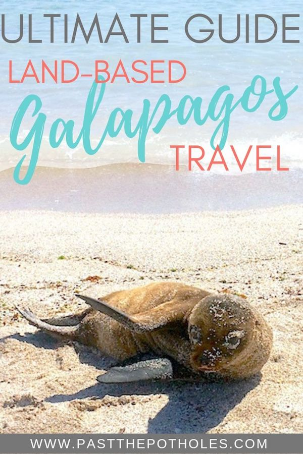 Sea lion pup on a beach with the text: Ultimate Guide to Land-Based Galapagos Travel.