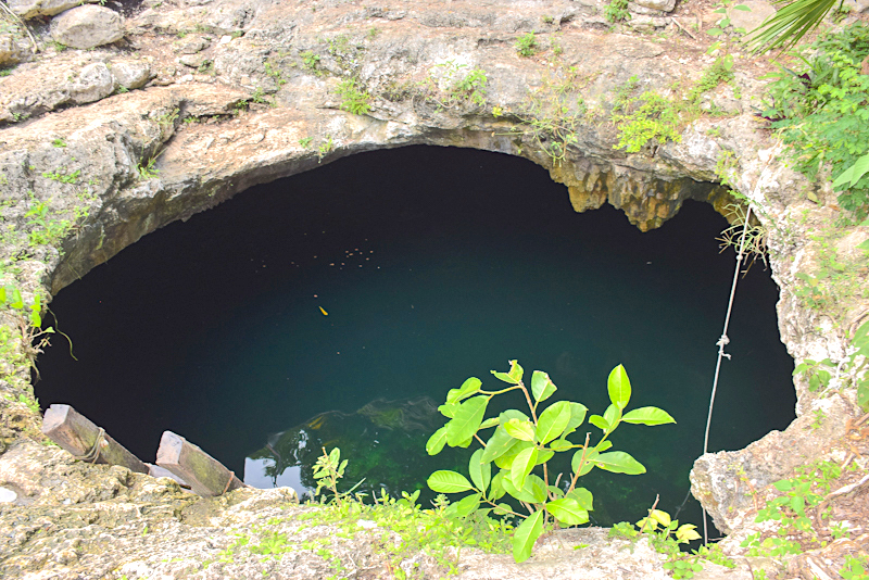 Looking into Calavera Cenote, a water-filled sinkhole in Mexico.