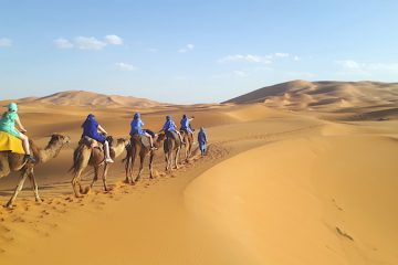 Camels walking in Morocco, Sahara Desert tour.