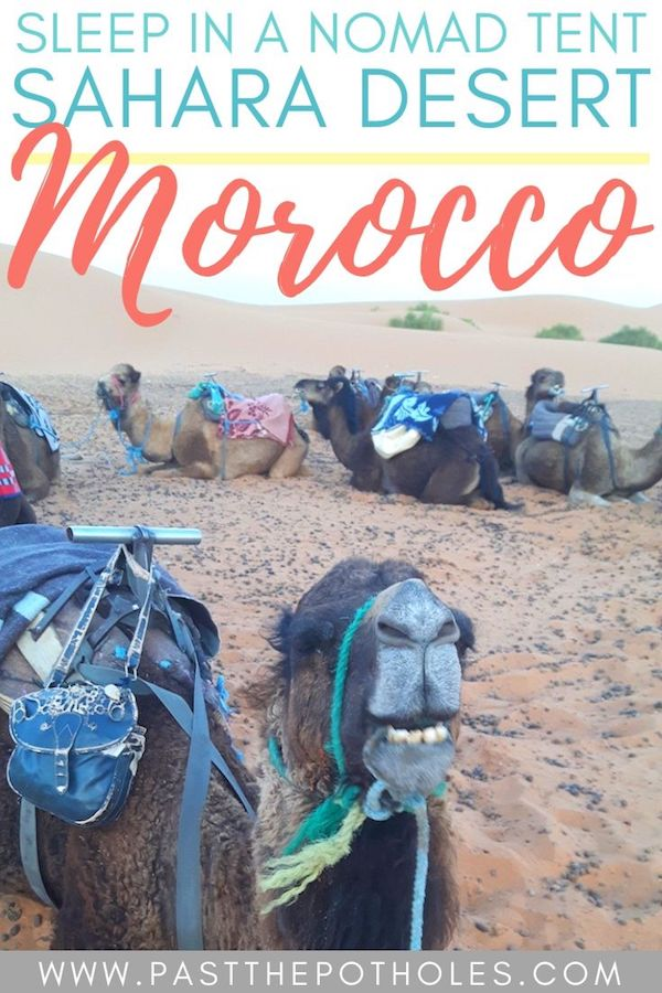 Line of camels laying in desert resting with text: Sleep in a nomad tent, Sahara Desert Morocco.
